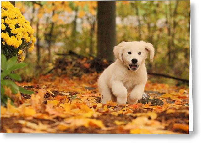 Fall Frolic  Greeting Card