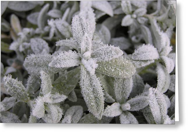 Fall Frost On Plants Greeting Card by Richard Mitchell