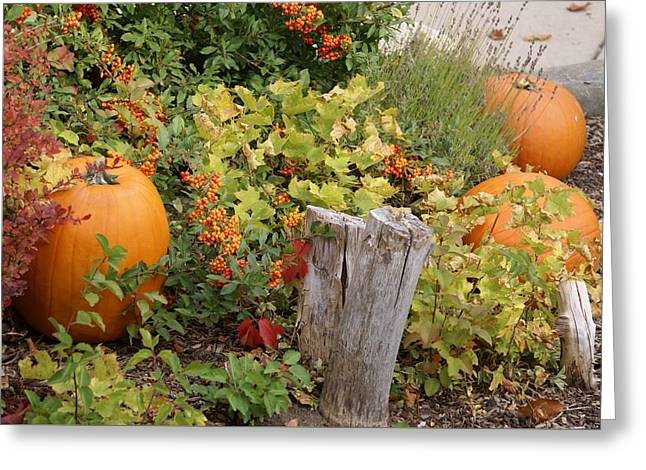 Fall Garden Greeting Card by Cynthia Powell