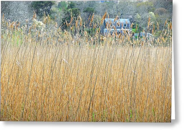 Fall Grass Greeting Card