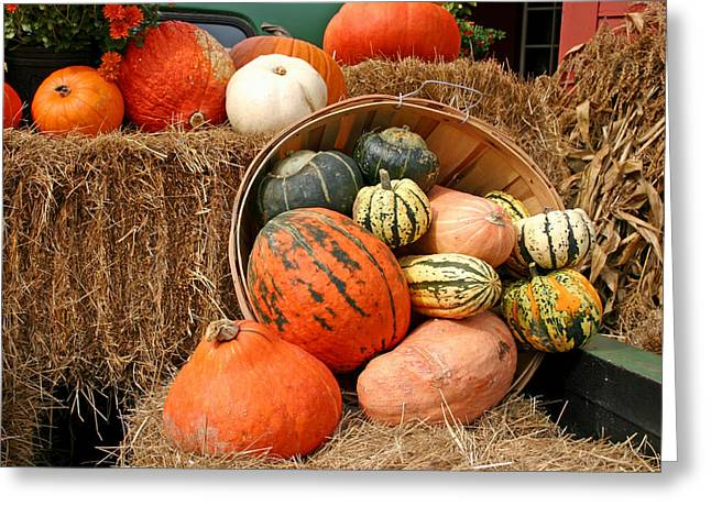 Fall Harvest Greeting Card by Frank Russell