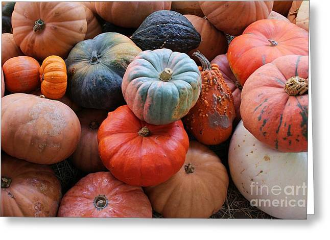Fall Harvest Greeting Card by Robert Wilder Jr