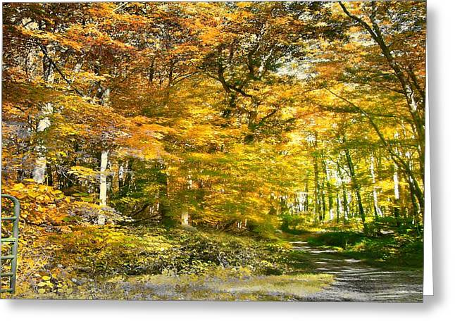 Fall In Bruceton Mills Forest Greeting Card