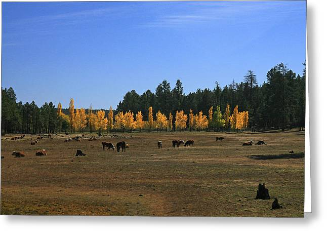 Fall In Line Greeting Card