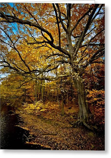 Fall In Pennsylvania Greeting Card