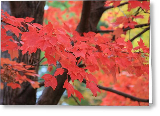 Fall In Red Greeting Card