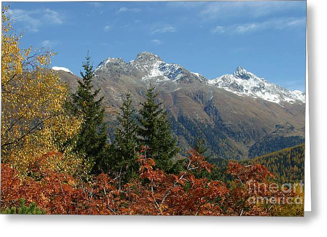 Fall In St. Moritz Greeting Card by Stan and Anne Foster