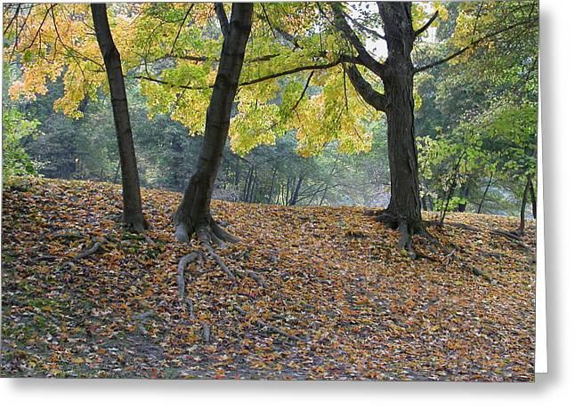 Fall In Stony Brook Greeting Card by Raju Alagawadi