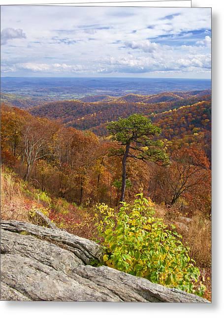 Fall In The Blue Ridge Greeting Card by Rachel Morrison