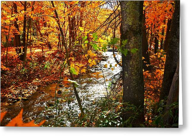 Fall In The Mountains Greeting Card
