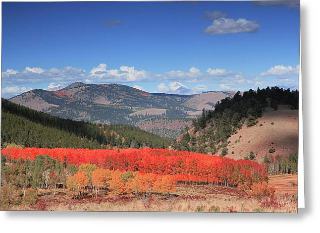 Fall In  Ute Trail  Greeting Card