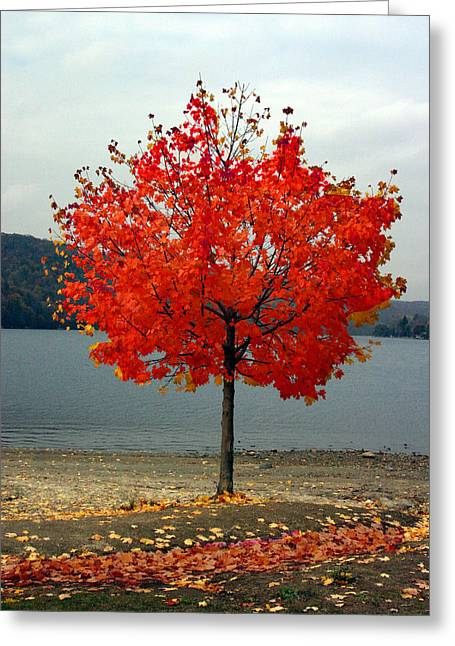 Fall Is Here Greeting Card by Dennis Curry