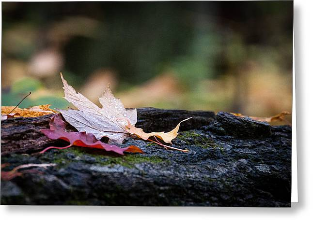 Greeting Card featuring the photograph Fall Is Here by Monte Stevens
