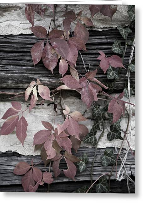 Fall Ivy Greeting Card by Pete Hellmann