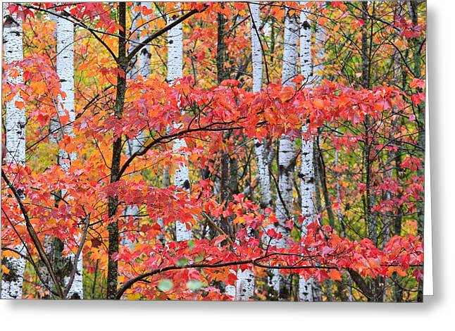 Fall Layers Greeting Card by Adam Pender