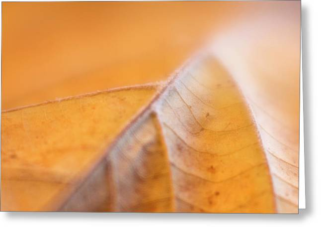 Greeting Card featuring the photograph Fall Leaf by Elena Nosyreva