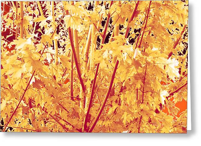 Fall Leaves #1 Greeting Card