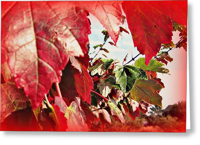 Fall Leaves #10 Greeting Card