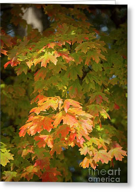 Pear tree greeting cards page 8 of 40 fine art america fall leaves 13 autumn leaf colors art greeting card m4hsunfo