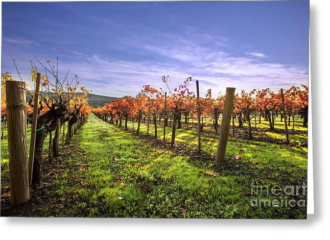 Fall Leaves At The Vineyard Greeting Card by Jon Neidert