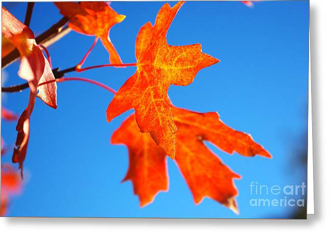 Fall Leaves Greeting Card by Gloria Pasko