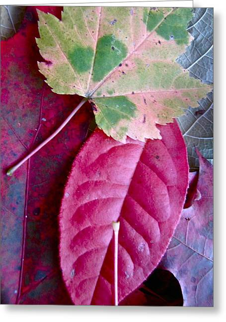 Fall Leaves Greeting Card by Lori Miller