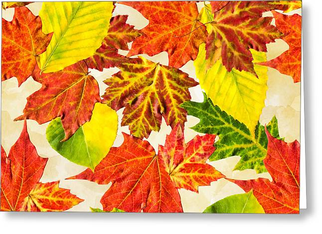 Greeting Card featuring the mixed media Fall Leaves Pattern by Christina Rollo