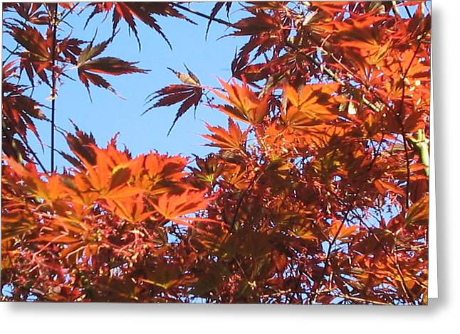 Fall Leaves Greeting Card by Valerie Josi