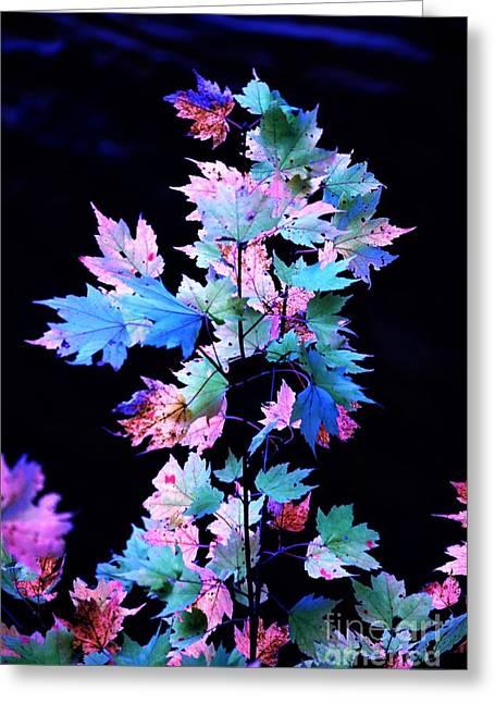 Fall Leaves1 Greeting Card