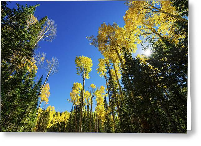 Fall Light Greeting Card by Chad Dutson