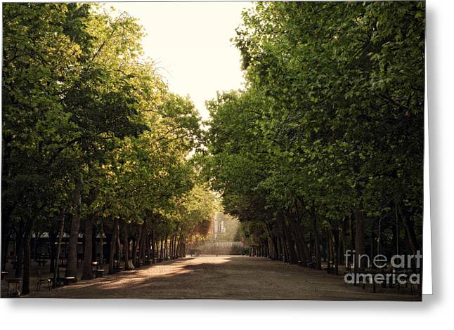 Fall Lights In Jardin Luxembourg Greeting Card by Ivy Ho