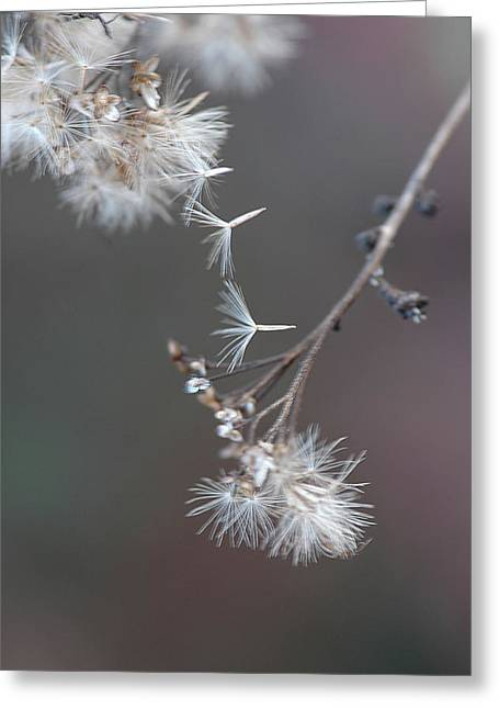 Greeting Card featuring the photograph Fall - Macro by Jeff Burgess