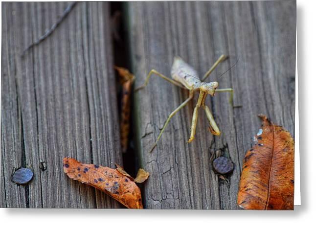 Fall Mantis  Greeting Card