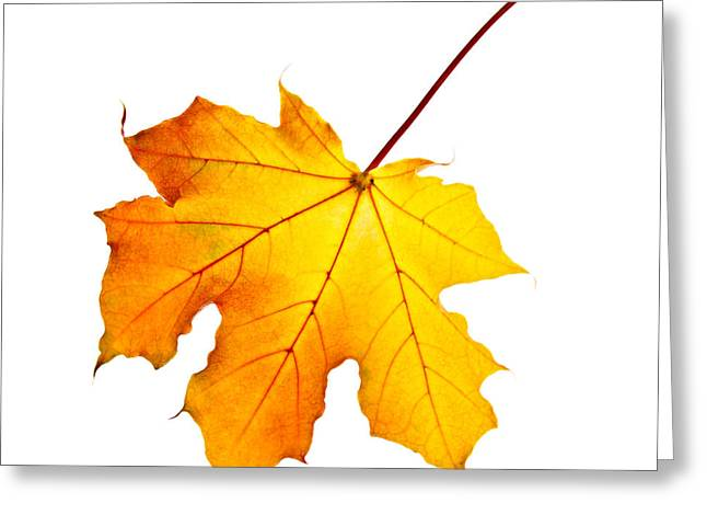 Fall Maple Leaf Greeting Card