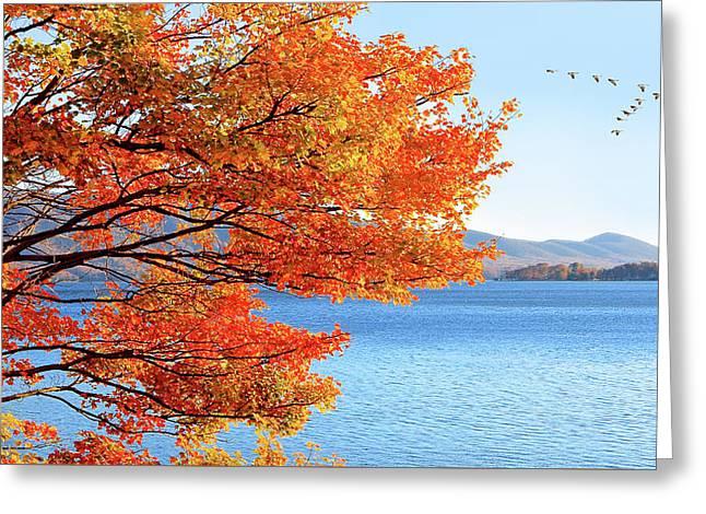 Fall Maple Tree Graces Smith Mountain Lake, Va Greeting Card