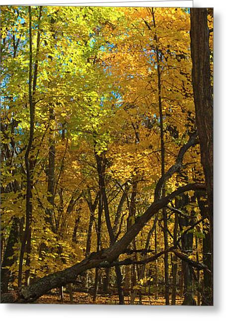 Fall Maples- Uw Arboretum  - Madison - Wisconsin Greeting Card