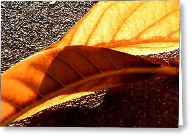 Fall Greeting Card by Mark Stevenson