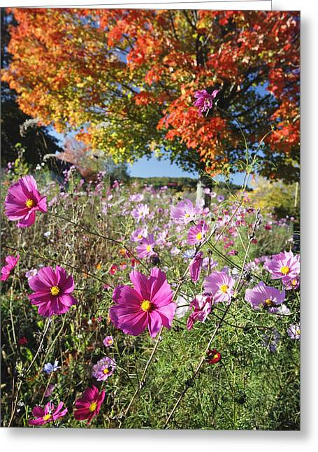 Fall Meadow With Wildfowers Greeting Card by George Oze