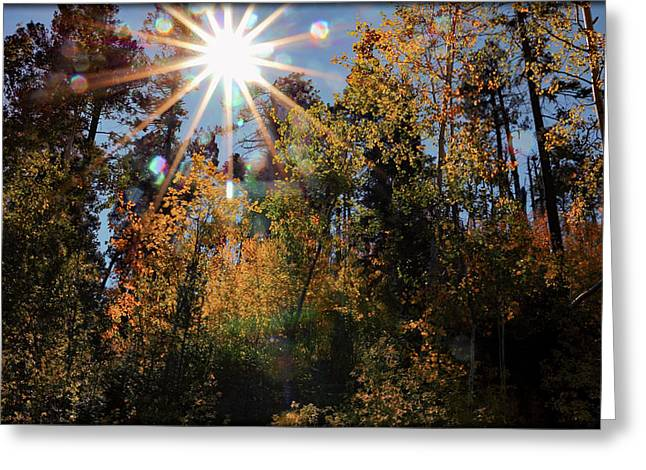Fall Mt. Lemmon 2017 Greeting Card