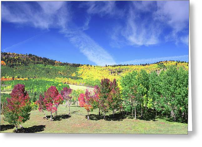 Fall On County Road 12 Greeting Card