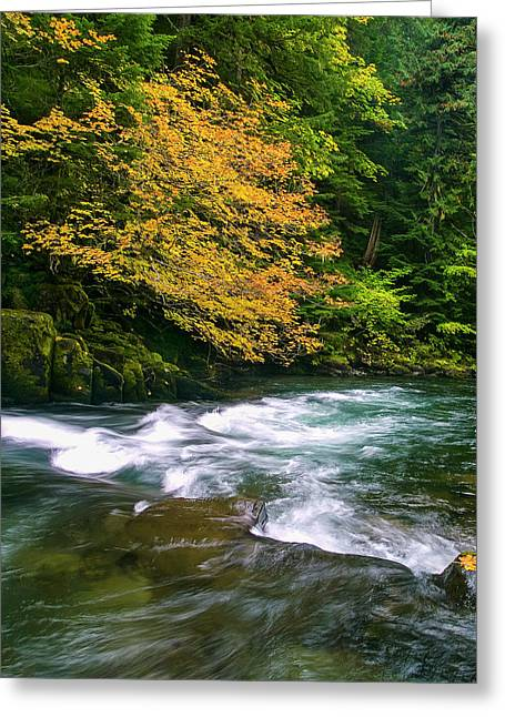 Fall On The Clackamas River, Or Greeting Card