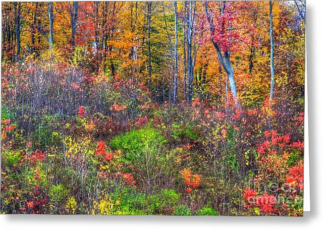 Fall On The Floor Greeting Card by Robert Pearson