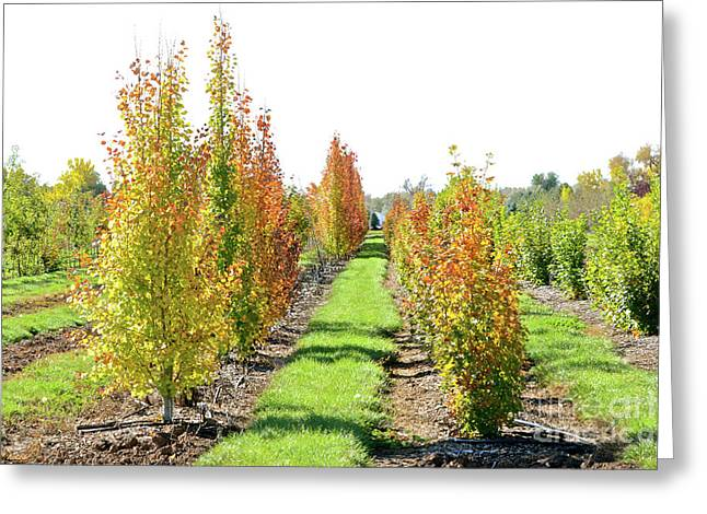 Fall On The Tree Farm Greeting Card
