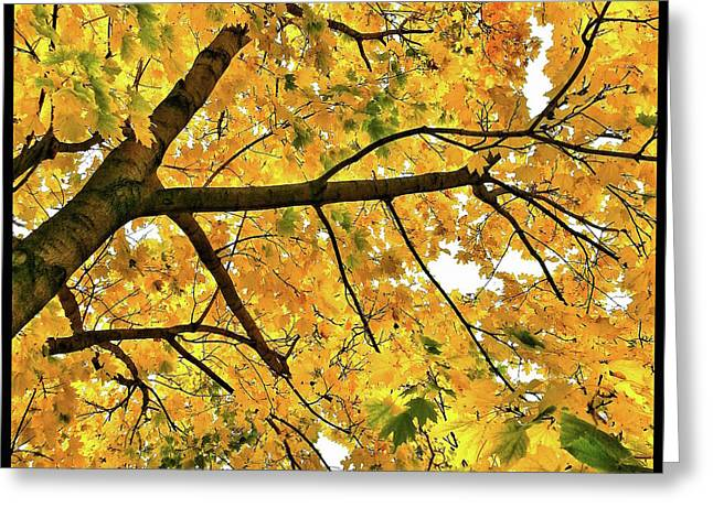 Fall On William Street Greeting Card