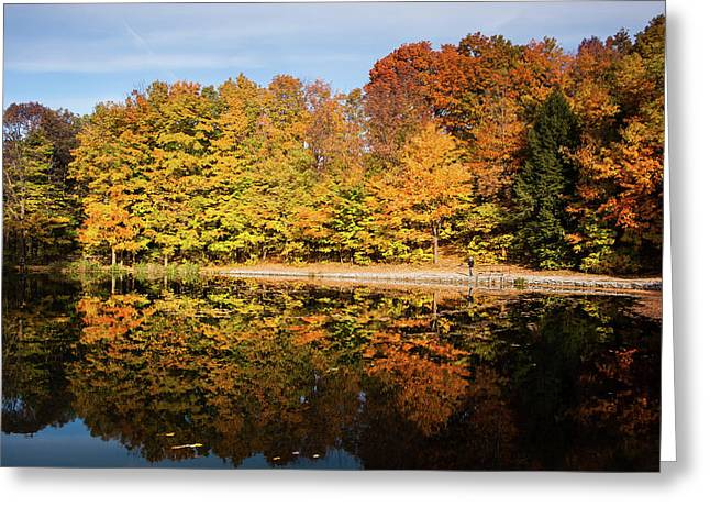 Fall Ontario Forest Reflecting In Pond  Greeting Card