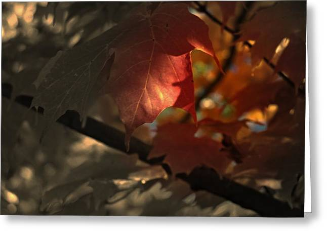 Fall Or Not Greeting Card