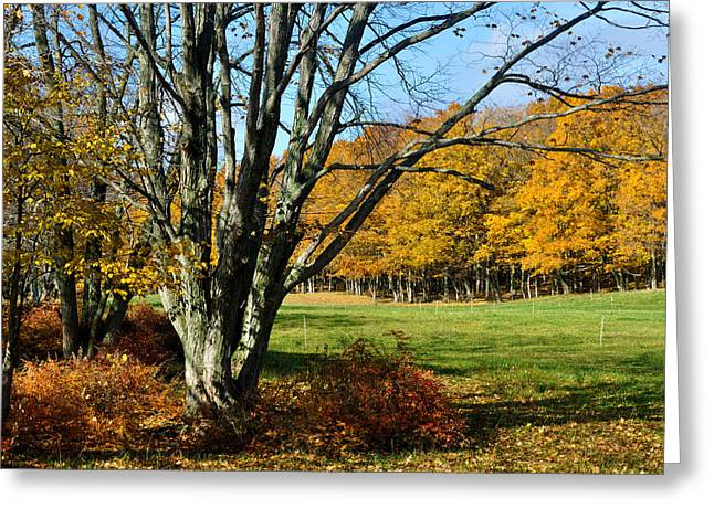 Fall Pasture Greeting Card