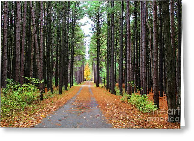 Fall Pines Road Greeting Card