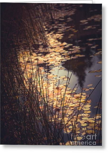 Greeting Card featuring the photograph Fall Pond by The Forests Edge Photography - Diane Sandoval