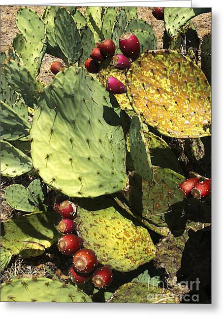 Fall Prickly Pears  Greeting Card